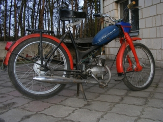 komar-sztywniak-9